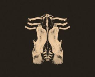 «Pansements» d'Oktoplut