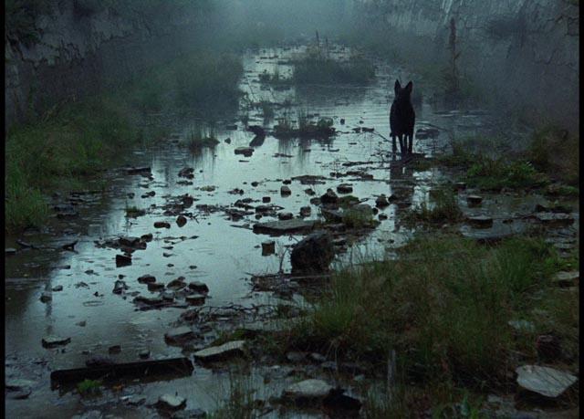 «Zoom sur un classique»: Stalker d'Andreï Tarkovski