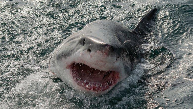 «Zoom sur un classique»: Jaws de Steven Spielberg